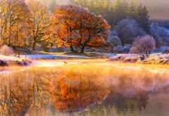 autumn, river, november, tree, hoarfrost, nature, morning, frost, reflection wallpaper