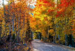 nature, autumn, forest, trees, leaves, road wallpaper