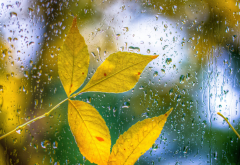 autumn, leaves, drops, glass, nature wallpaper