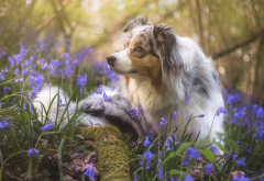 dog, animals, flowers, nature, spring wallpaper