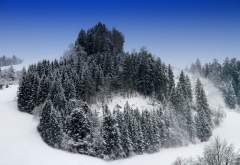 hill, trees, snow, winter, forest, nature wallpaper