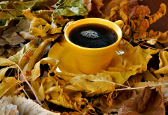 coffee, petals, leaf, nature, food wallpaper