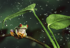 nature, animals, frog, drop, leaves, rain, macro, jungle, amphibian wallpaper