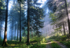 nature, forest, trees, road, sky, morning, sun rays wallpaper