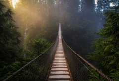 forest, nature, suspension bridge, tree wallpaper