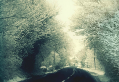 winter, nature, road, snow, alley wallpaper