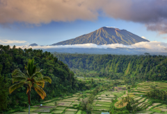 bali, palms, tree, field, mountains, clouds, nature, rendang, rice terrace wallpaper