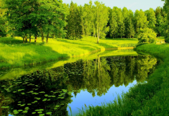 river, park, trees, greenery, reflection, pavlovsk, russia, nature wallpaper