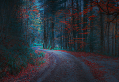 forest, road, leaves, leaf, autumn, nature wallpaper