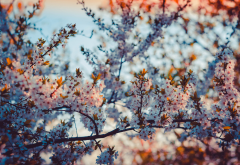 flowers, nature, trees wallpaper