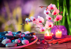 spa, vase, flowers, orchid, stems, bamboo, candles, plate, stones wallpaper
