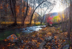 autumn, river, tree, leaf, stones, nature wallpaper