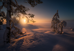 skjelstadmarka, norway, nature, landscape, winter, snow, tree, fir, house, sun, sunset, rays wallpaper