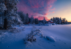 norway, nature, landscape, winter, snow, tree, fir, evening wallpaper