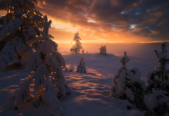 norway, nature, landscape, winter, snow, tree, fir, sun, sunset, rays, sky, clouds, evening wallpaper