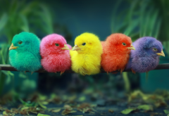 birds, chicks, perch, colorful chicks, animals wallpaper