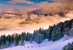 italy, nature, landscape, mountains, forest, fir, winter, snow, clouds, fog wallpaper
