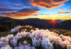 taiwan, nature, landscape, mountains, sunset, nature reserve, rhododendron, bushes, sun rays, taroko wallpaper