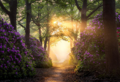 rhododendron, flowers, walkway, path, sunlight, tree, nature, netherlands, nijverdal wallpaper