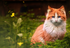 animals, cat, grass, flowers, red cat wallpaper
