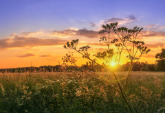 nature, field, grass, sunset, wildflowers wallpaper
