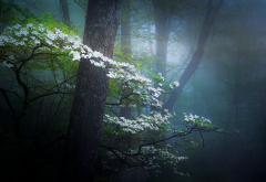nature, spring, forest, haze, fog, trees, bloom, flowers wallpaper