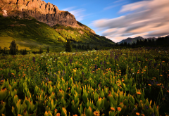 nature, landscape, mountains, meadow, grass, flowers wallpaper