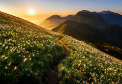 nature, landscape, mountains, meadow, grass, flowers, daffodils, path, sunset, dawn, fog wallpaper