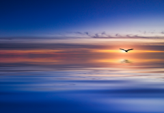 sea, bird, art, minimalism, simple, nature wallpaper