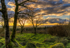 ireland, trees, moss, clouds, nature, dark clouds wallpaper