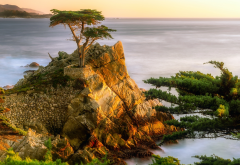 usa, california, ocean, rock, stones, tree, pines, sea, nature wallpaper