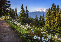 nature, landscape, flowers, mountains, park, nature reserve, trees, path, united states, forest, mount rainier, lilies wallpaper