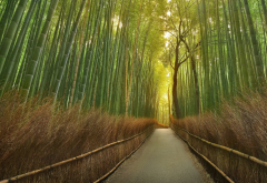nature, trail, bamboo wallpaper
