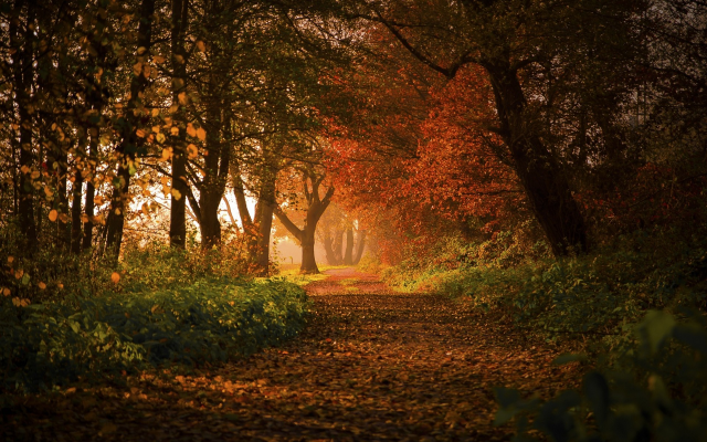 1920x1200 pix. Wallpaper nature, landscape, forest, sunrise, fall, path, leaves, trees, shrubs, sunlight, Germany