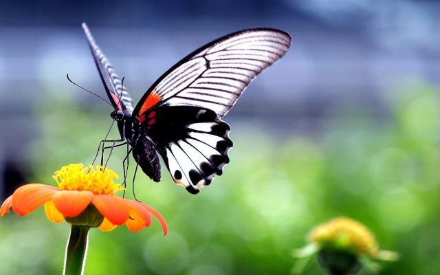 1920x1080 pix. Wallpaper butterfly, insect, animals, nature, wings, flowers, closeup, macro