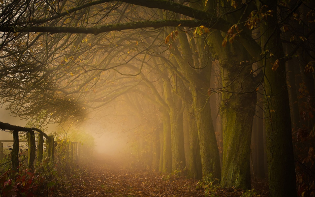 1920x1200 pix. Wallpaper leaves, forest, mist, nature, tree, fall, autumn, morning, sunrise