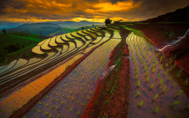 1920x1200 pix. Wallpaper rice paddy, terraces, sky, Thailand, sunrise, mountains, field, water, nature, landscape
