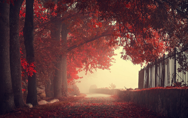 1920x1200 pix. Wallpaper nature, fog, landscapes, fall, autumn, fences, trees, mist, roads, leaves