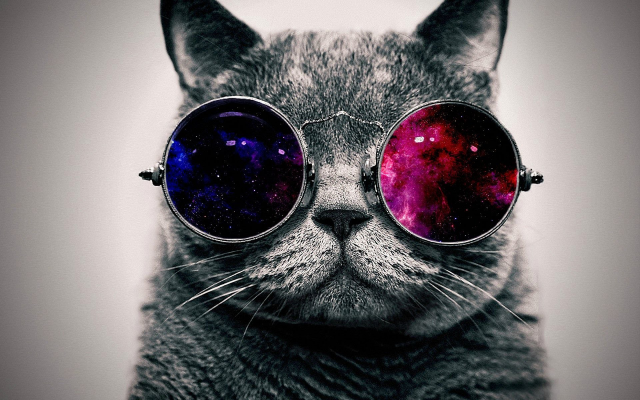 1920x1200 pix. Wallpaper cats, animals, glasses, funny