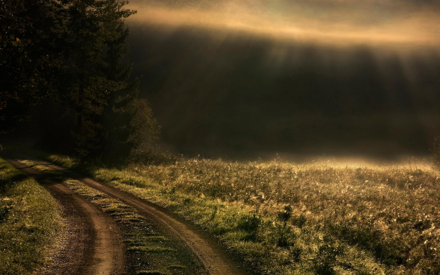 1920x1200 pix. Wallpaper sunrise, mist, roads, path, trees, grass, sun rays, landscapes, nature