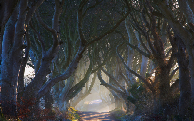 2000x1250 pix. Wallpaper Ireland, nature, fairy tale, road, alley, tree, mist, sun rays