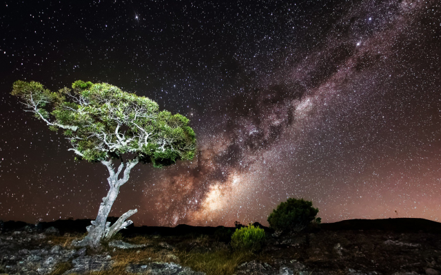 1920x1080 pix. Wallpaper milky way, nature, sky, night, stars, tree, long exposure