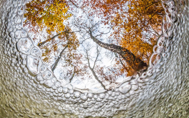 2560x1706 pix. Wallpaper nature, tree, underwater, bubbles, leaves, fall, forest, fisheye lens