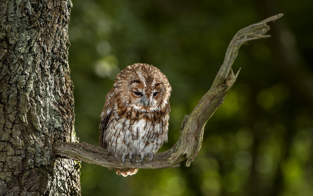 1920x1200 pix. Wallpaper owl, bird, animals, nature, tree