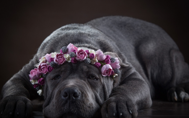 1920x1080 pix. Wallpaper animals, dog, pet, flowers, rose, wreath