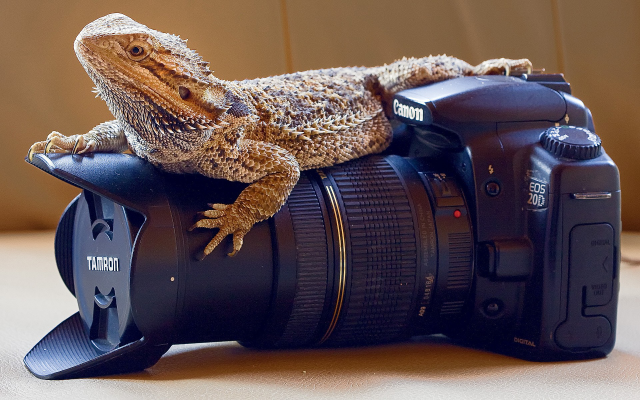 1920x1200 pix. Wallpaper Canon EOS 20D, animals, reptiles, lizards, skin, cameras, lenses, Canon, closeups, photography