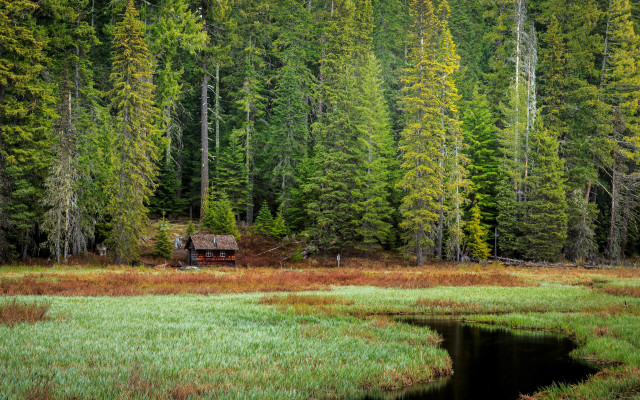 5120x2880 pix. Wallpaper oregon, mount hood, forest, pine, tree, swamp, house, grass, nature