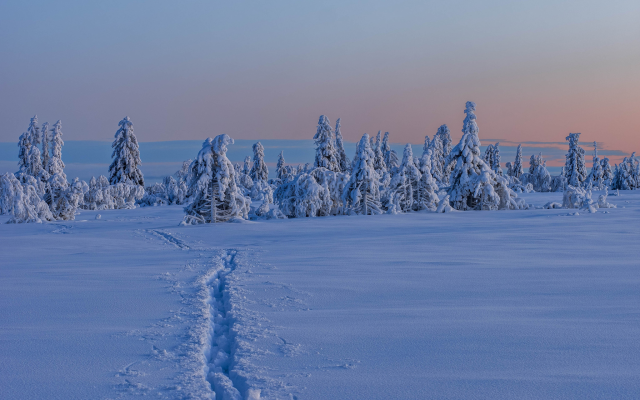 2048x1333 pix. Wallpaper gitsfjallet, vasterbotten, sweden, lapland, winter, snow, tree, nature