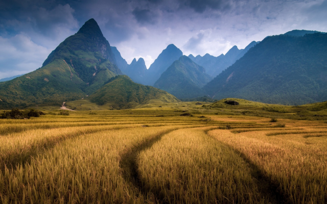 1920x1080 pix. Wallpaper Vietnam, nature, landscape, mountain, clouds, field, trees, forest, spikelets, hill