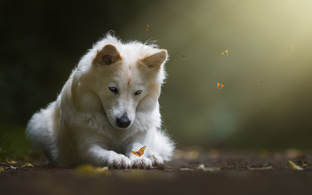 2000x1125 pix. Wallpaper dog, butterfly, animals, insects